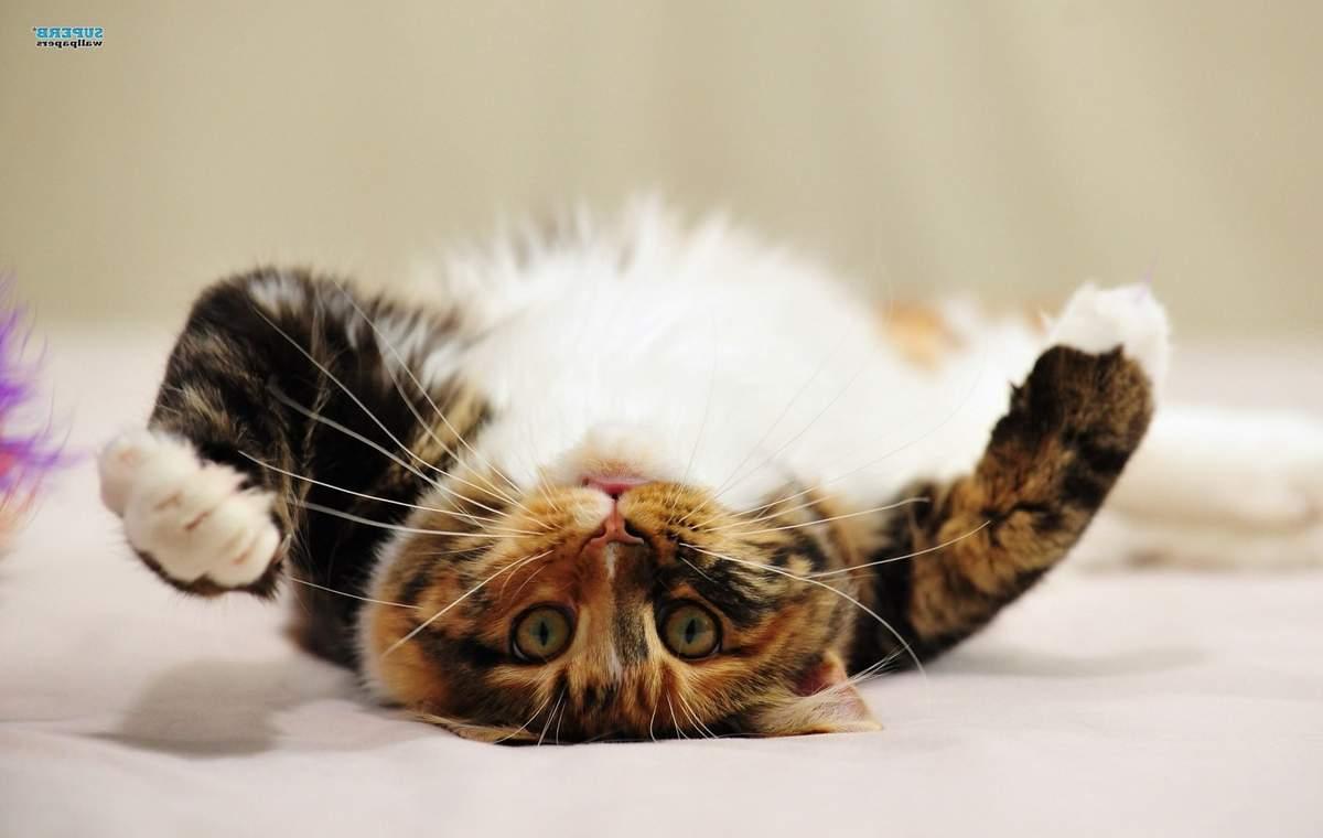 tesné mačička dostane veľký penis zadarmo amatér eben porno